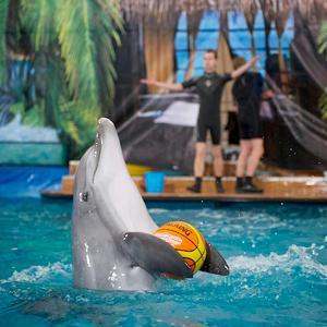 Дельфинарии, океанариумы Дзержинского