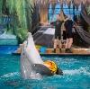 Дельфинарии, океанариумы в Дзержинском