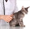 Ветеринарные клиники в Дзержинском